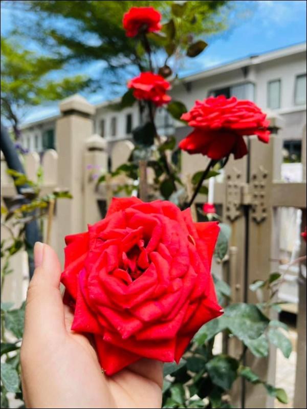 Biệt thự triệu đô hoành trángcủa Nhật Kim Anh: Bốnmùa ngập tràn hoa tươi từ nhà ra ngõ-12