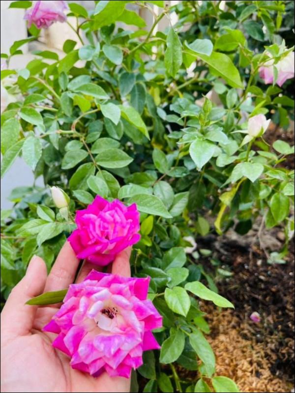 Biệt thự triệu đô hoành trángcủa Nhật Kim Anh: Bốnmùa ngập tràn hoa tươi từ nhà ra ngõ-13