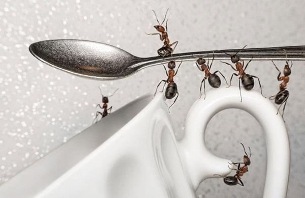 Điên tiết vì kiến bâu đầy lọ đường, hãy dùng ngay 4 cách cực hay này để đuổi chúng đi-2