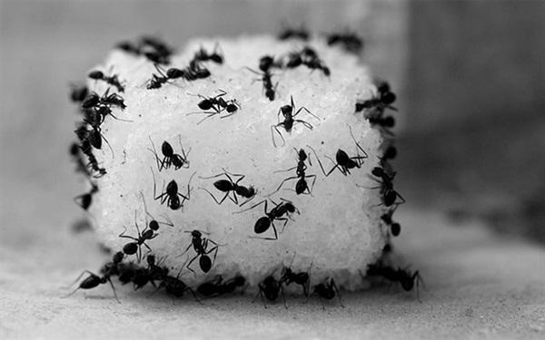 Điên tiết vì kiến bâu đầy lọ đường, hãy dùng ngay 4 cách cực hay này để đuổi chúng đi-3