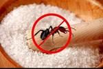'Điên tiết' vì kiến bâu đầy lọ đường, hãy dùng ngay 4 cách cực hay này để đuổi chúng đi