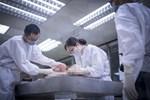 Chuyện chưa kể của những nữ pháp y: Đang khám nghiệm thì tử thi bất ngờ 'ợ hơi', chạm vào cơ thể không nguyên vẹn bằng hai tay