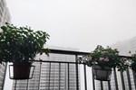 Dự báo thời tiết 9/3, Hà Nội sương mù giăng kín