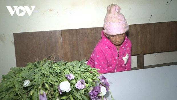 Phát hiện đối tượng 86 tuổi trồng thuốc phiện trên nương-1