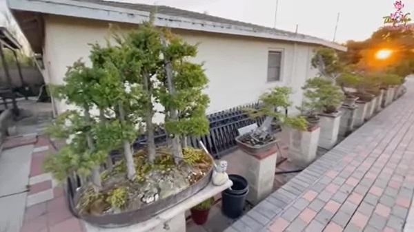 Hé lộ nhà rộng 2000 m2 của Bằng Kiều tại Mỹ, cây quý bằng cả gia tài, phải xích lại-5