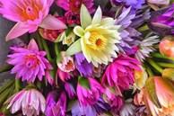 Chị em đua mốt chơi mới, hoa dại mọc hoang nay trở nên đắt đỏ