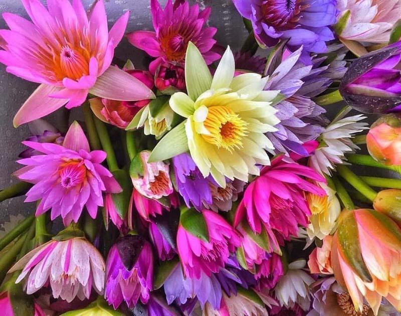Chị em đua mốt chơi mới, hoa dại mọc hoang nay trở nên đắt đỏ-2