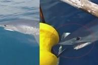 Cá mập lao liên tục vào thuyền ngư dân