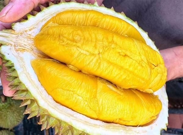 Sầu riêng ngon nhất thế giới ồ ạt về Việt Nam, rẻ chưa từng có-1