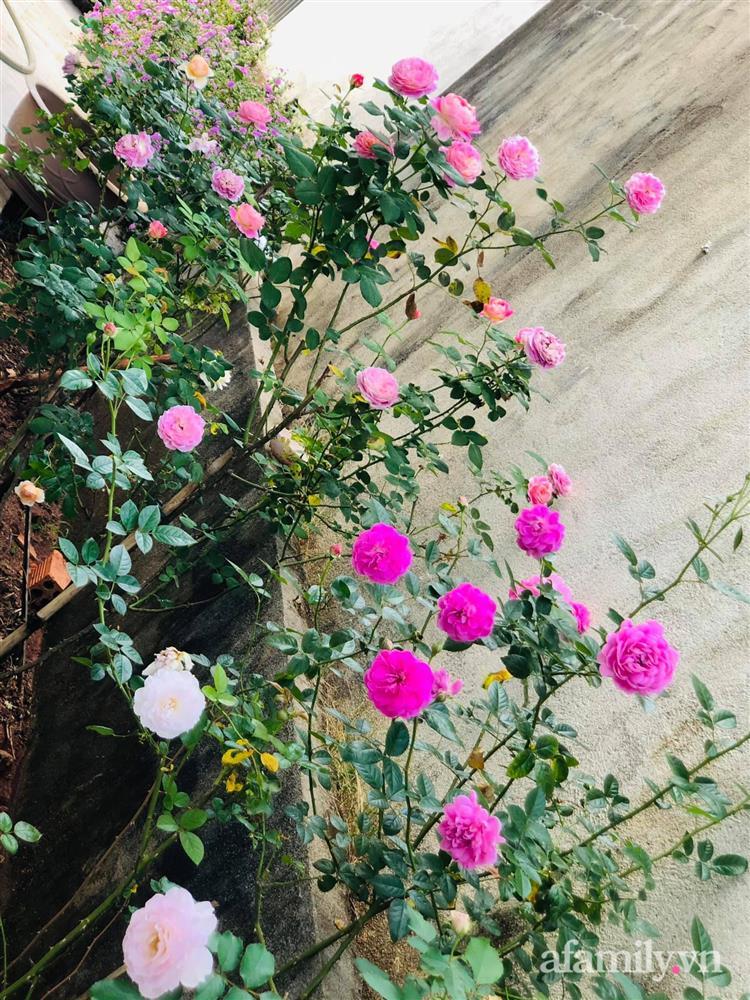 Bận rộn chăm sóc 3 con, bà mẹ đảm vẫn một tay thiết kế khu vườn đầy hoa đẹp như mơ ở Đắk Nông-11