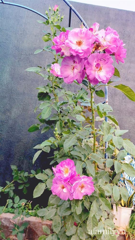 Bận rộn chăm sóc 3 con, bà mẹ đảm vẫn một tay thiết kế khu vườn đầy hoa đẹp như mơ ở Đắk Nông-17