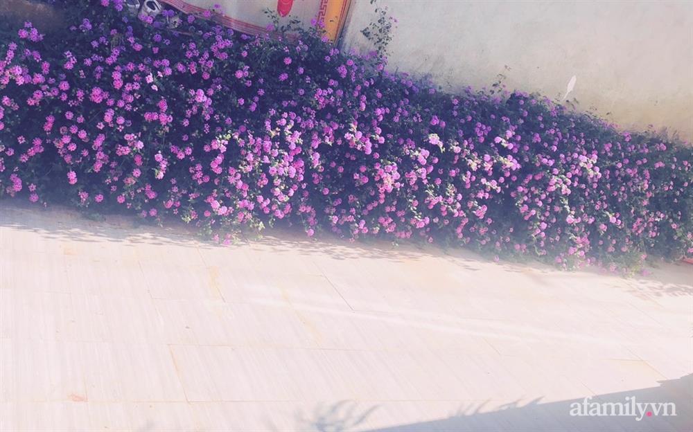 Bận rộn chăm sóc 3 con, bà mẹ đảm vẫn một tay thiết kế khu vườn đầy hoa đẹp như mơ ở Đắk Nông-28
