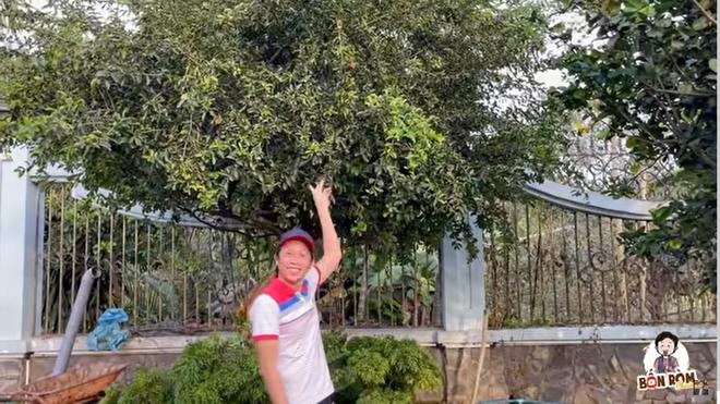 Hoài Linh khoe cây 8 tỷ ra quả, tiết lộ điều bất ngờ về mình năm mười mấy tuổi-1