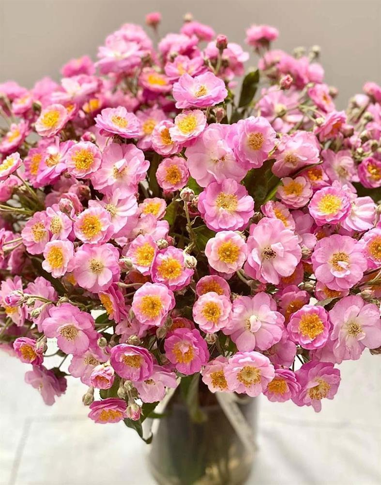 Năm chỉ có một mùa, Hà thành đổ xô mua hoa dại thôn quê chơi xuân-1