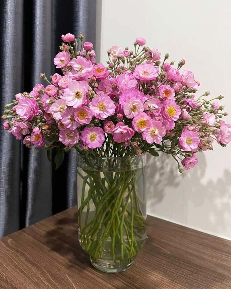 Năm chỉ có một mùa, Hà thành đổ xô mua hoa dại thôn quê chơi xuân-2