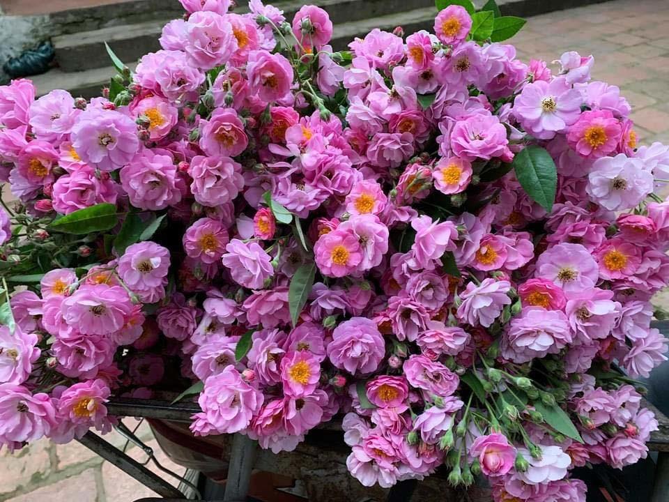 Năm chỉ có một mùa, Hà thành đổ xô mua hoa dại thôn quê chơi xuân-3