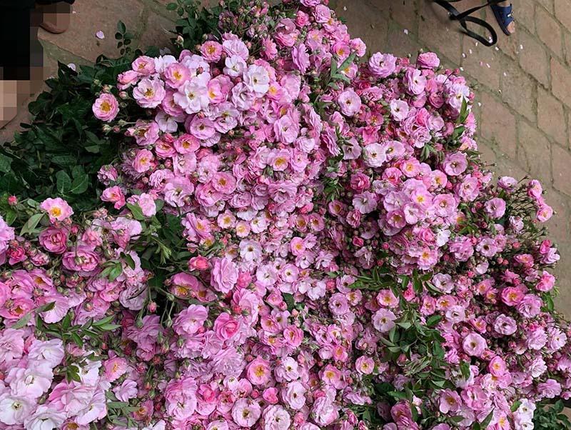 Năm chỉ có một mùa, Hà thành đổ xô mua hoa dại thôn quê chơi xuân-4