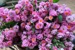 Hoa dại bờ bụi siêu đắt đỏ, mối buôn bán 2.000 cành/ngày-5