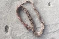 Cứu 2 bệnh nhân ở An Giang bị rắn chàm quạp cắn nguy kịch khi đi cắt lá sả