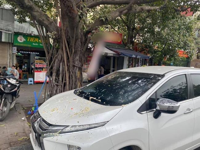Đỗ ô tô gần gốc cây, chủ xe choáng váng khi thấy xế hộp bị ăn nguyên bát phở, công an phải đến hiện trường-1