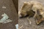 Phát hiện rắn hoang bò vào phòng, chủ nhà khóc ngất khi thấy phần bụng rắn phình to và thảm cảnh thương tâm tột độ-4