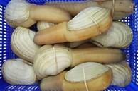 Ốc vòi voi khổng lồ đổ về Việt Nam, giá rẻ chưa từng có