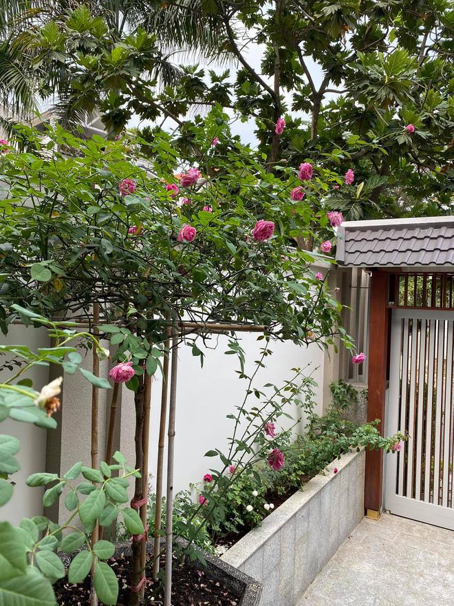 Biệt thự của Quý Bình và bà xã doanh nhân: Hoa phủ kín lối đi, mảnh vườn lớn là ao ước của nhiều người-5