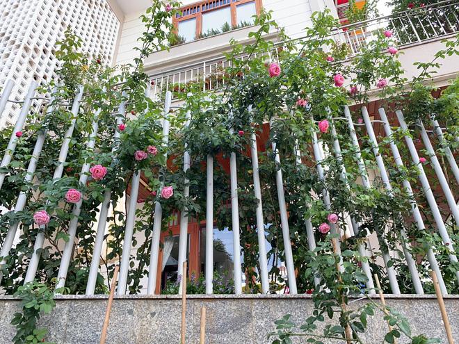 Biệt thự của Quý Bình và bà xã doanh nhân: Hoa phủ kín lối đi, mảnh vườn lớn là ao ước của nhiều người-6