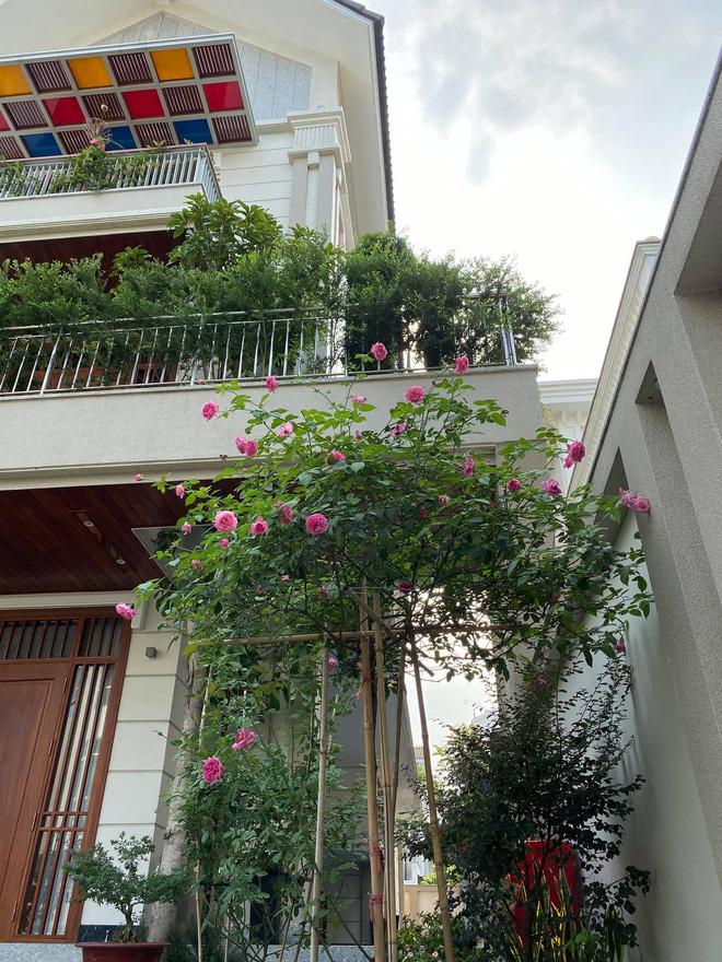 Biệt thự của Quý Bình và bà xã doanh nhân: Hoa phủ kín lối đi, mảnh vườn lớn là ao ước của nhiều người-7