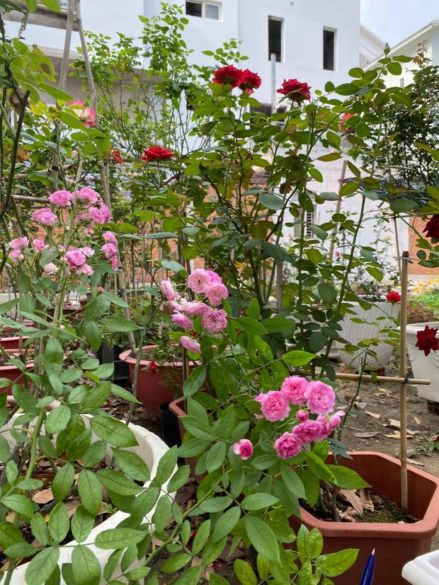 Biệt thự của Quý Bình và bà xã doanh nhân: Hoa phủ kín lối đi, mảnh vườn lớn là ao ước của nhiều người-9