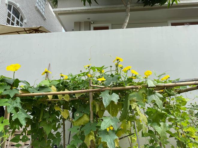 Biệt thự của Quý Bình và bà xã doanh nhân: Hoa phủ kín lối đi, mảnh vườn lớn là ao ước của nhiều người-10