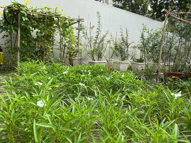 Biệt thự của Quý Bình và bà xã doanh nhân: Hoa phủ kín lối đi, mảnh vườn lớn là ao ước của nhiều người-11