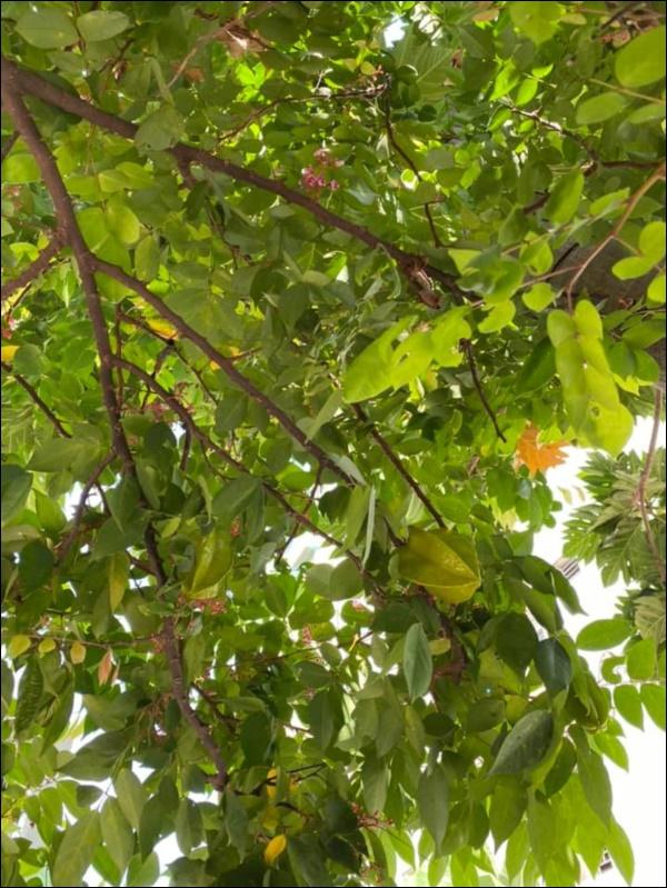 Biệt thự triệu đô của Vy Oanh và chồng đại gia hoa tươi nở bốn mùa, cây trái sai trĩu quả-5