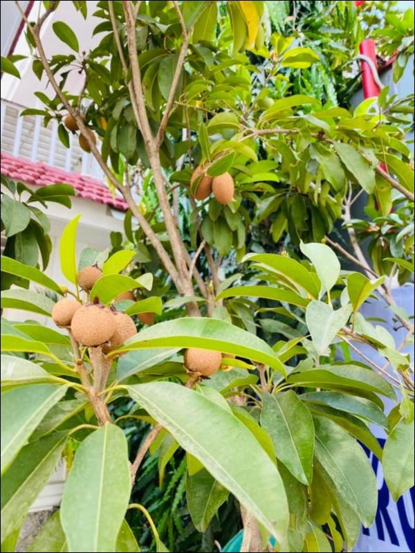 Biệt thự triệu đô của Vy Oanh và chồng đại gia hoa tươi nở bốn mùa, cây trái sai trĩu quả-6