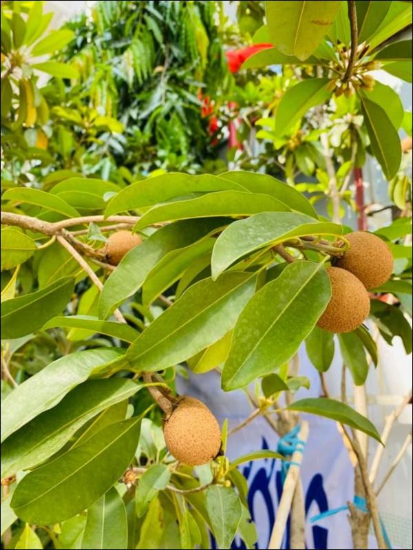 Biệt thự triệu đô của Vy Oanh và chồng đại gia hoa tươi nở bốn mùa, cây trái sai trĩu quả-7