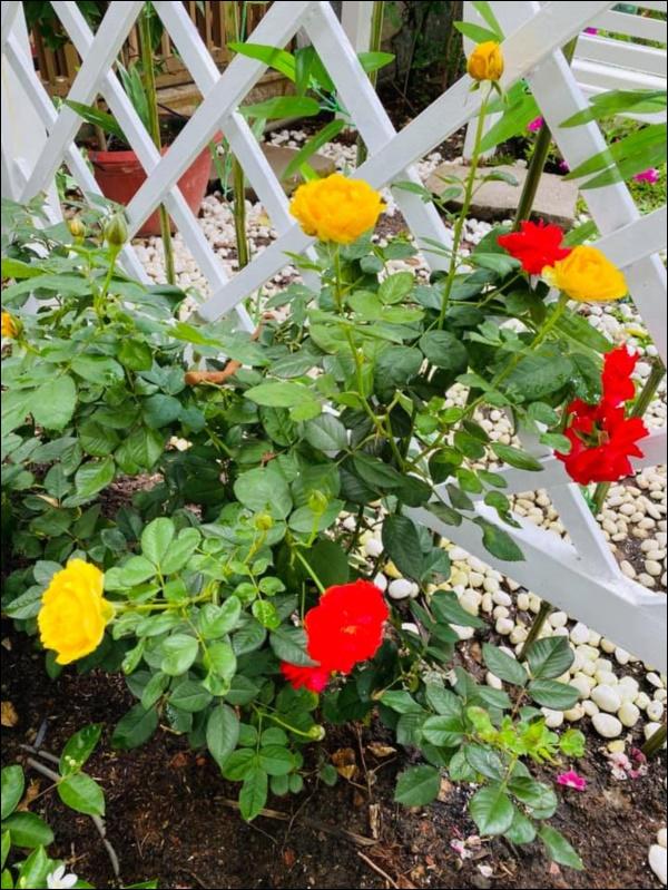 Biệt thự triệu đô của Vy Oanh và chồng đại gia hoa tươi nở bốn mùa, cây trái sai trĩu quả-10