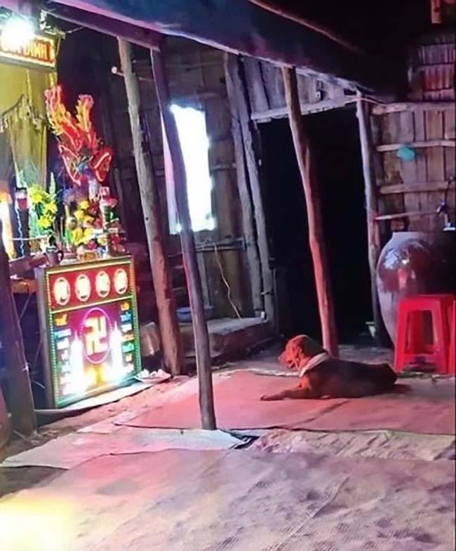 Xúc động hình ảnh chú chó buồn rầu nằm trước bàn thờ sau khi người chủ bị cẩu tặc dùng súng điện bắn chết-2