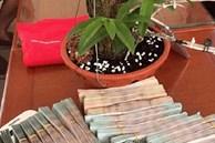 Xôn xao thương vụ mua bán lan đột biến gần 2 tỷ đồng ở Nghệ An