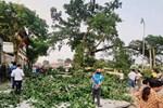 Vụ cây đa 300 tuổi ở Nghệ An gãy đổ đè 4 học sinh tiểu học: Một bé phải chuyển ra Hà Nội điều trị-2