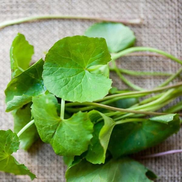 Loại rau dại này đắt gấp 2 lần rau muống, rau lang và bổ như nhân sâm tự nhiên nhưng nhiều người Việt vẫn chưa biết cách dùng đúng-1