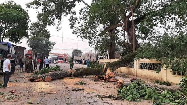 Vụ cây đa 300 tuổi ở Nghệ An gãy đổ đè 4 học sinh tiểu học: Một bé phải chuyển ra Hà Nội điều trị-1