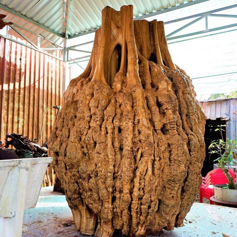 Hàng lạ: Hải sản trông như nấm, quả bí để chơi 3 tháng rồi nấu ăn-2