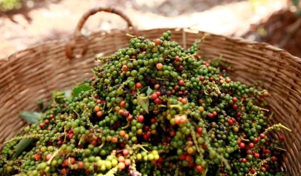 5 mặt hàng ở Việt Nam được ví như vàng đen, món thứ hai còn xuất khẩu số lượng lớn ra nước ngoài-2