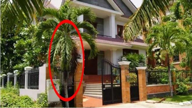 6 loại cây gọi tài lộc đến nhà, cứ trồng trước cửa kiểu gì cũng giàu sang, của nả ùn ùn kéo đến-1