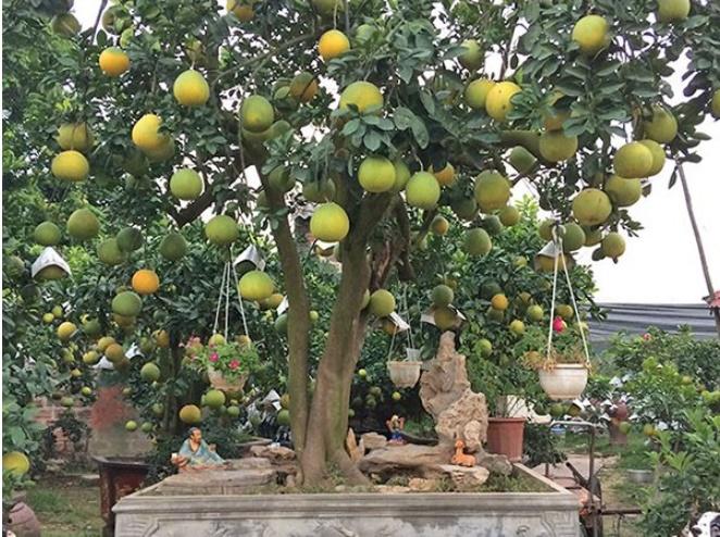 6 loại cây gọi tài lộc đến nhà, cứ trồng trước cửa kiểu gì cũng giàu sang, của nả ùn ùn kéo đến-2
