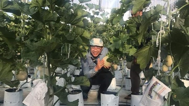 Thăm khu vườn hàng chục loại hoa và rau sạch của nghệ sĩ gạo cội Trung Dân-3