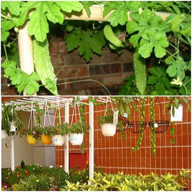 Thăm khu vườn hàng chục loại hoa và rau sạch của nghệ sĩ gạo cội Trung Dân-4