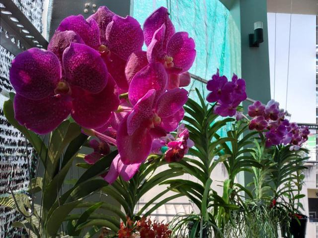 Thăm khu vườn hàng chục loại hoa và rau sạch của nghệ sĩ gạo cội Trung Dân-5