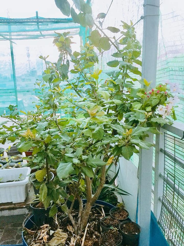 Thăm khu vườn hàng chục loại hoa và rau sạch của nghệ sĩ gạo cội Trung Dân-8