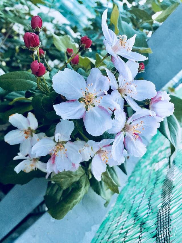 Thăm khu vườn hàng chục loại hoa và rau sạch của nghệ sĩ gạo cội Trung Dân-10